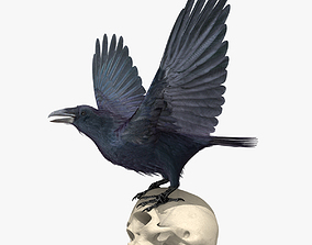 Common Raven - rigged - animated 3D model crow