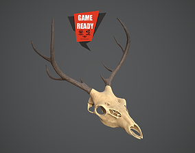 3D asset SKULL ANIMAL Pbr Game Ready