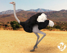 3D model rigged Ostrich