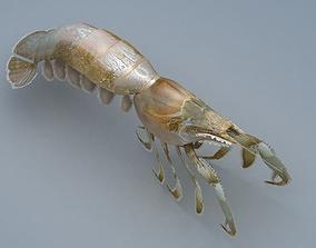 Laomediidae Shrimp Prawn 3D asset