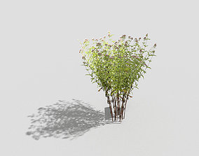 3D asset game-ready Low poly Plant pine
