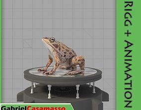 Common Frog 3D model