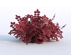 Plant Berberys Garden 3D asset