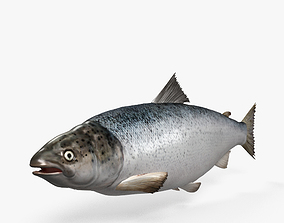 Atlantic Salmon HD 3D