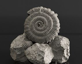 3D printable model Realistic Sea fosil