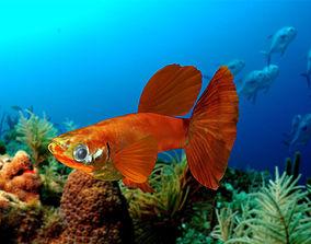 3D model Guppy Fish