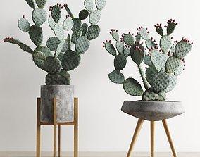 3D model Opuntia In Concrete Planters Cactus Set