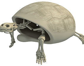 3D skeleton Turtle Skeleton with Cutaway Shell