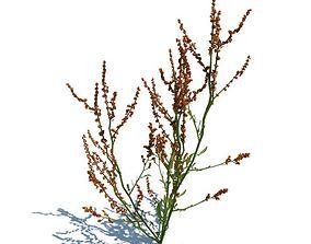 Medicinal Herb 3D