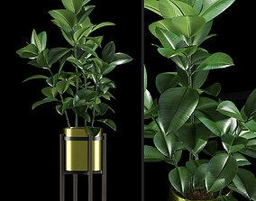 3D Plants 215