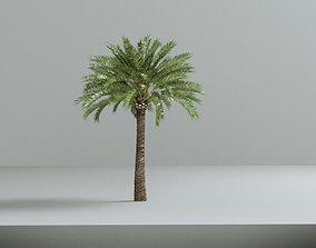 Phoenix dactylifera palm family date palm 3D