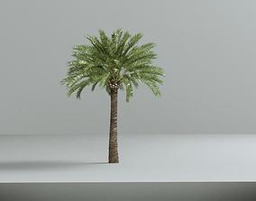 Phoenix dactylifera palm family date palm 3D model