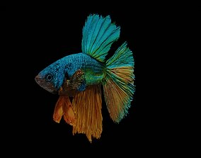 betta splendens 3D model animated