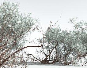 EVERYPlant Big Sagebrush 11 --12 Models--