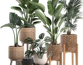 Decorative plants in a basket 574 3D
