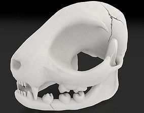 Cat Skull 3D asset