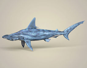 3D model Realistic Hammerhead Shark