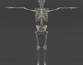 3D asset rigged Human Skeleton