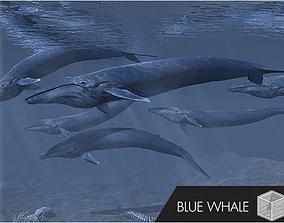 3D model PA Blue Whale