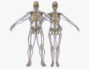 3D Full Male And Female Skeleton Anatomy