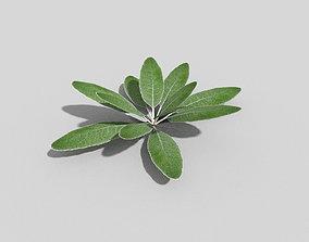 foliage 3D asset low-poly Plant