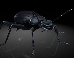 Insect Collection 7 beetle 3D model