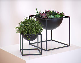 Plants in a cube vases 3D