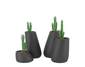 pot Plant 11 3D