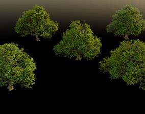 High Poly Oak Tree Set 3D model