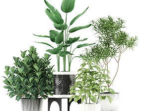 3D model Plants collection 118