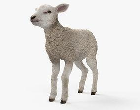 Lamb HD 3D
