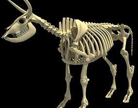 Cow Bone Skeletal 3D model