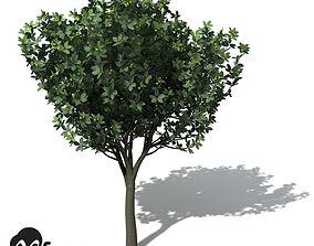 XfrogPlants Rusty Fig 3D