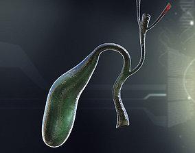 Human Gall Bladder Anatomy 3D