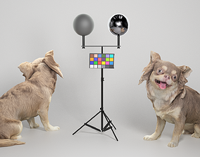 Chihuahua dog 20 3D asset