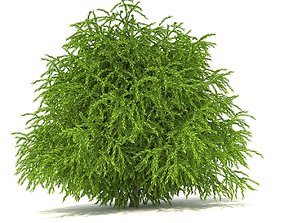 Cryptomeria 3D model