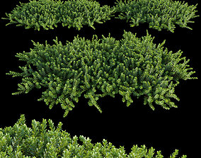 Arctostaphylos Manzanita Emerald Carpet 01 3D model