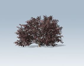 3D Tree - Elderberry