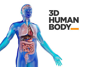 Human Male anatomy model with internal organs with 4K 3D