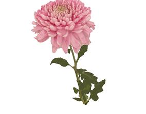 3D Fw22 - Pink Flower