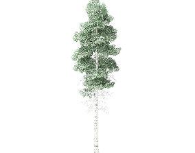 Quaking Aspen Tree 3D Model 7m