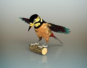 Woodpecker Bird 3D