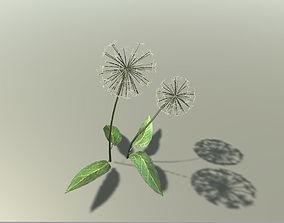 Dandelion 3D model