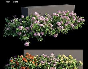 3D model Ixora plant set 18