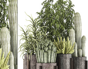 3D model Collection of Exotic Cactus Plants 9