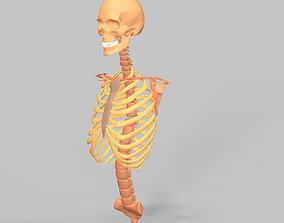Human Skeleton Rigged 3D asset