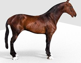3D HORSE horse