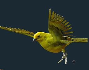 3D model yellow bird animated