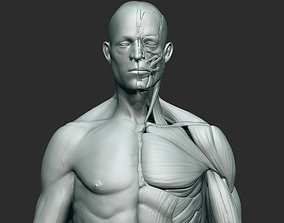 3D Anatomy sculpt