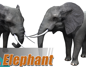 African elephant 3D model animated